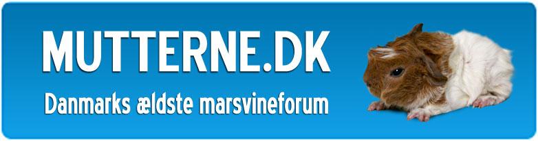 Mutterne.dk - Danmarks ældste marsvineforum